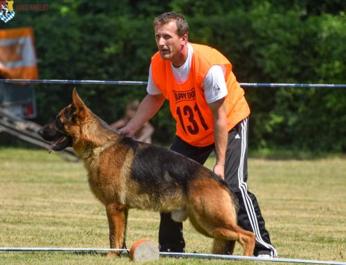 2015 Ingolstadt German Shepherd Show Recap