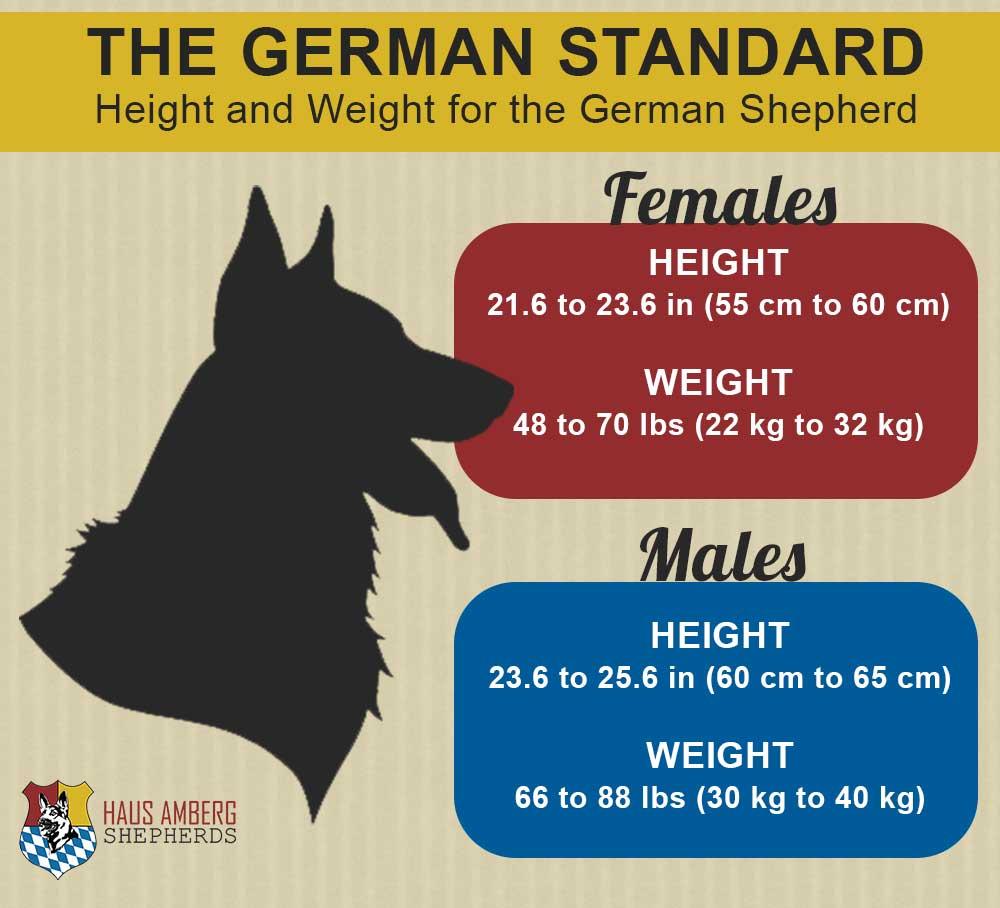 height-weight-gsd