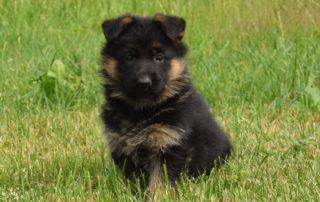 puppy-haus-amberg